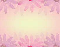 La flor de la margarita en estilo dulce suave del color y de la falta de definición texturiza el fondo Imagenes de archivo