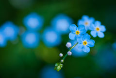 La flor de la novia Imágenes de archivo libres de regalías