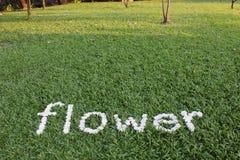 La flor de la palabra hecha de las flores de la margarita Fotos de archivo libres de regalías