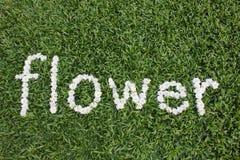 La flor de la palabra hecha de las flores de la margarita Imagen de archivo