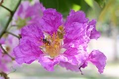 La flor de la reina Imágenes de archivo libres de regalías