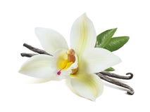 La flor de la vainilla se pega y las hojas aisladas fotografía de archivo libre de regalías