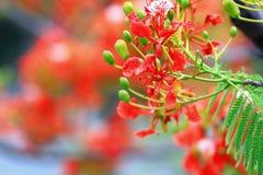 La flor de llama Imágenes de archivo libres de regalías