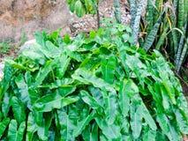 La flor de los Cocos mezcla con la flor de la suegra al lado de la cerca de la pared Imágenes de archivo libres de regalías