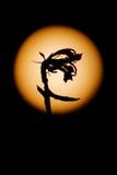 La flor de noche en fondo de la Luna Llena Fotos de archivo