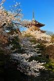 La flor de Sakura de las flores de cerezo durante tiempo de primavera con el templo en Japón imagenes de archivo