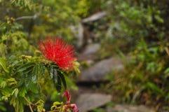 La flor del Brasil fotografía de archivo