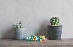 la flor del cactus con los pernos en la pared de madera deja de lado interior moderno y Fotos de archivo libres de regalías