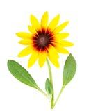 La flor del cono Fotografía de archivo libre de regalías