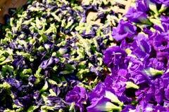 La flor del guisante de mariposa se seca en la cesta para la mezcla con la agua caliente a la consumición imagen de archivo