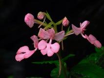 La flor del lirio de vaca fotos de archivo libres de regalías