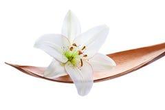 La flor del lirio en un Coco hojea, aislado en blanco Fotografía de archivo libre de regalías