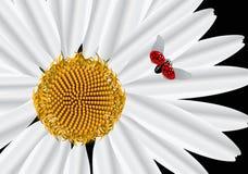 La flor del marco. Cuadrado. ilustración del vector
