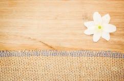 la flor del nemorosa de la anémona en un pastel teñió el backg de madera y de la arpillera Imágenes de archivo libres de regalías