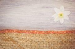 la flor del nemorosa de la anémona en un pastel teñió el backg de madera y de la arpillera Imagenes de archivo