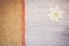 la flor del nemorosa de la anémona en un pastel teñió el backg de madera y de la arpillera Fotografía de archivo libre de regalías