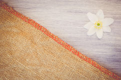 la flor del nemorosa de la anémona en un pastel teñió el backg de madera y de la arpillera Foto de archivo libre de regalías