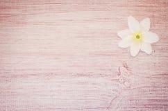 la flor del nemorosa de la anémona en un pastel teñió la superficie de madera Fotos de archivo