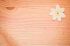 la flor del nemorosa de la anémona en un pastel teñió la superficie de madera Fotos de archivo libres de regalías