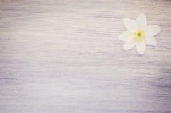 la flor del nemorosa de la anémona en un pastel teñió la superficie de madera Fotografía de archivo libre de regalías