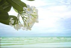 La flor del plumeria en el fondo de la playa Fotos de archivo libres de regalías