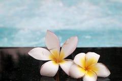 La flor del Plumeria y la piscina azul ondularon el detalle del agua Imagenes de archivo