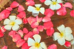La flor empapa en agua Imágenes de archivo libres de regalías