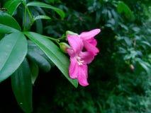 La flor en el jardín parece tan hermosa foto de archivo
