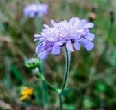 La flor en el tallo Imagen de archivo libre de regalías