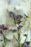 La flor en hielo Foto de archivo libre de regalías