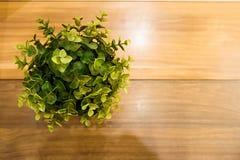 La flor en maceta está en el fondo de madera de la tabla Imágenes de archivo libres de regalías
