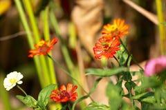 La flor en Tailandia Fotos de archivo
