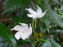 La flor es belleza por completo en mi jardín fotografía de archivo libre de regalías