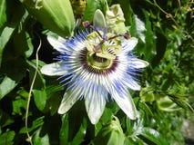 La flor es inusual y hermosa Imagen de archivo libre de regalías