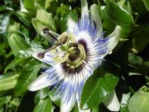 La flor es inusual y hermosa Foto de archivo