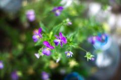 la flor floreció foto de archivo