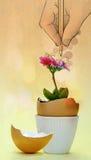 La flor floreció dentro de una cáscara de huevo Foto de archivo