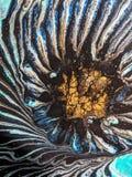 La flor floreciente fotografía de archivo