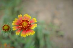La flor hermosa imágenes de archivo libres de regalías