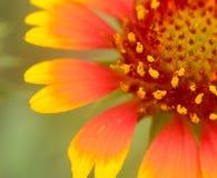 La flor hermosa fotografía de archivo