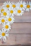 La flor hermosa de la margarita miente en un tablero de madera Fotografía de archivo