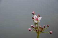 La flor hermosa del río foto de archivo