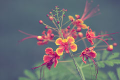 La flor hermosa en foco selectivo y el fondo borrosos Foto de archivo libre de regalías