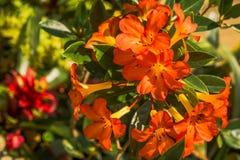 La flor hermosa está en los rayos de la luz Imágenes de archivo libres de regalías