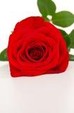 La flor hermosa macra es una rosa Fotografía de archivo libre de regalías