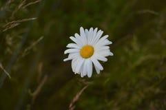 La flor hermosa sin corrige foto de archivo
