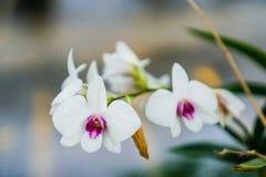 La flor hermosa y algo no son bonitas en el aire fresco Foto de archivo