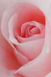 La flor macra hermosa se levantó Fotos de archivo