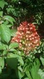 La flor maravillosa imágenes de archivo libres de regalías