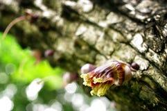 La flor mexicana de la calabaza, florece flora salvaje Imágenes de archivo libres de regalías